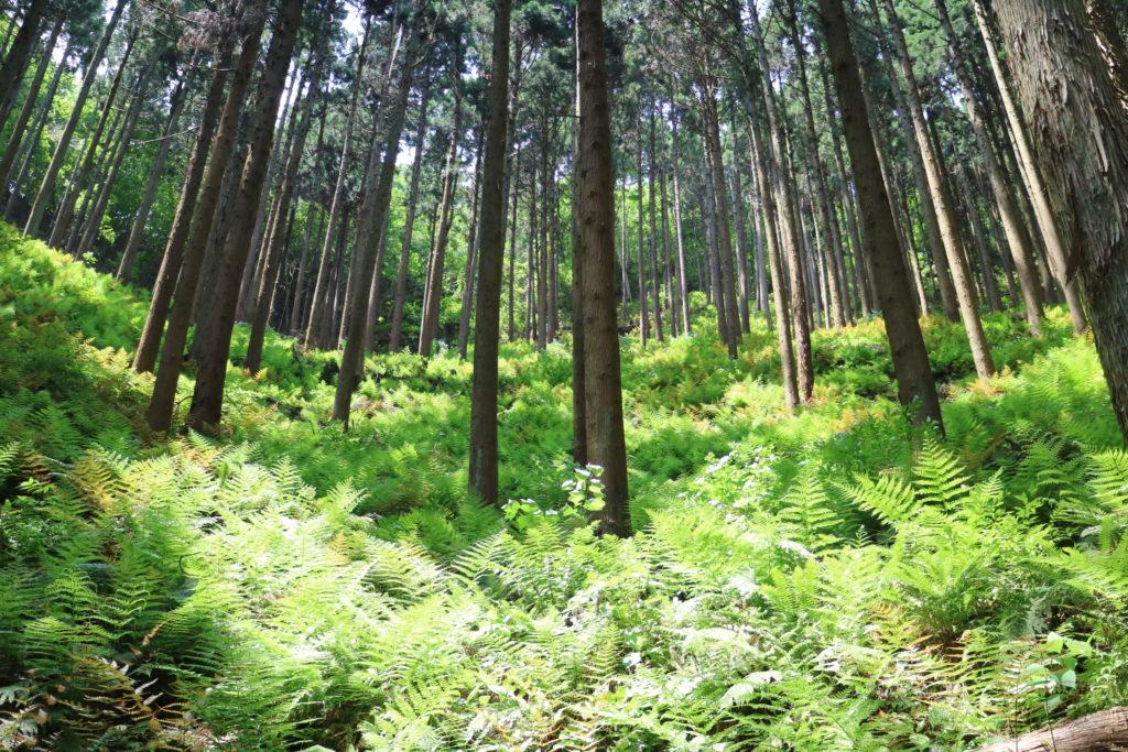 鶏足山の登山道(ファミリーコース)